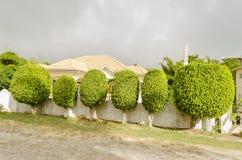 Linie von geformten immergrünen Bäumen lizenzfreies stockbild