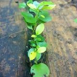 Linie von grünen Blättern Lizenzfreie Stockfotos