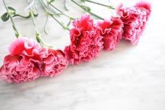 Linie von rosa Gartennelken stockfoto