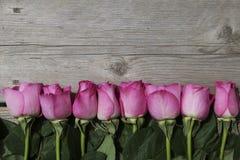 Linie von rosa Rosen auf einem hölzernen Hintergrund Lizenzfreies Stockfoto