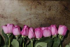 Linie von rosa Rosen auf Metallhintergrund Lizenzfreies Stockfoto