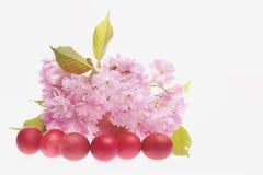 Linie von roten Eiern mit hellrosa Kirschblütenbündel Stockfotografie
