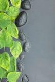 Linie von Steinen und von Blättern im Wasser Lizenzfreie Stockfotografie
