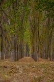 Linie w lesie Obraz Royalty Free