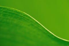 Linie zwischen von Blättern Stockfotografie