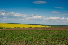 Linien der Ackerland- und rapeflowerfieldlandschaft Stockfoto