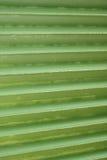 Linien und Beschaffenheit des grünen Palmblattes Lizenzfreies Stockfoto