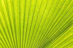 Linien und Beschaffenheiten der grünen Palme Lizenzfreies Stockbild