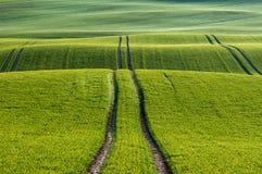 Linien und Wellen betrachten im Detail die Felder im Frühjahr Stockbilder
