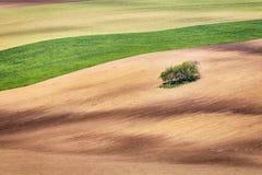 Linien und Wellen mit Bäumen im Frühjahr Lizenzfreie Stockfotografie