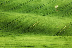 Linien und Wellen mit Bäumen im Frühjahr Lizenzfreie Stockfotos