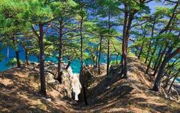 linii brzegowej 13 drzewa Fotografia Stock
