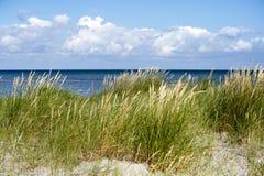Linii brzegowej trawa na Laesoe Fotografia Stock