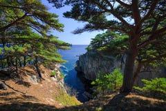 Linii brzegowych drzewa 21 Zdjęcia Royalty Free