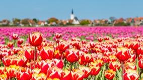 Linii horyzontu melina Hoorn Texel holandie Zdjęcie Royalty Free