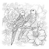 Linjär teckning av två papegojor och exotiska blommor stock illustrationer