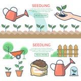 Linjära lägenhetväxter grundar, groddhandvektorn kärnar ur Arkivfoton