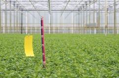 Linjal i växthus royaltyfria bilder