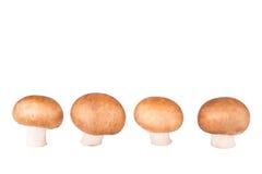 Linje av champignonen som isoleras på vit Arkivfoton