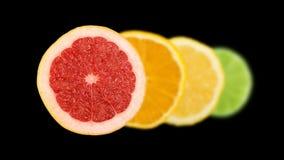 Linje av den skivade citronen, apelsinen, limefrukt och den röda grapefrukten royaltyfri fotografi