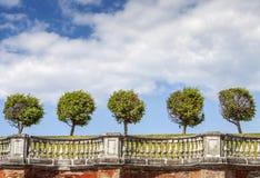 Linje av fem träd Arkivbilder