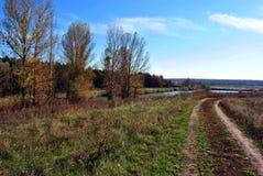 Linje av träd för gul poppel i kullarna på kanten av vägen Royaltyfri Bild