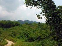 Linje av träd i gröna kullar runt om Semuc Champey Royaltyfri Fotografi