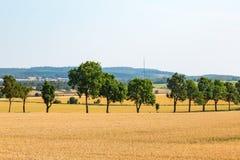 Linje av träd i lantligt landskap Royaltyfri Bild