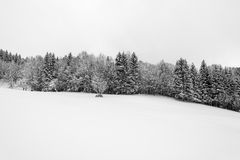 Linje av träd i snö Royaltyfria Foton