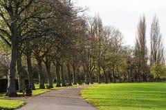 Linje av träd på sidan av en bana Royaltyfria Foton
