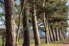 Linje av träd som skapar en bana i en parkera Arkivfoton