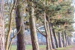 Linje av träd som skapar en bana i en parkera Arkivbilder