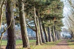 Linje av träd som skapar en bana i en parkera Royaltyfri Foto