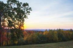 Linje av träd uppe på en kulle Arkivbilder