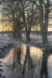 Linje av träd vid en pöl Royaltyfria Foton