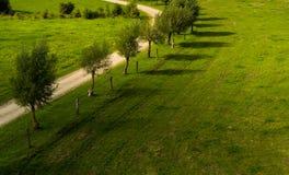 Linje av unga grändträd royaltyfri bild
