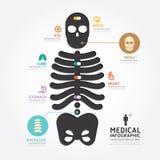 Linje stil för diagram för design för ben för skalle för Infographics vektor medicinsk Royaltyfri Bild