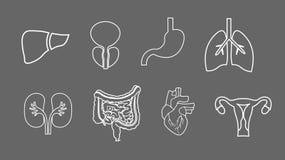 Linje symbolsuppsättning för mänskliga organ Anatomi av kroppen Reproduktivt system, lungor, livmoder, mage, hjärta, leverillustr royaltyfri illustrationer