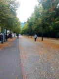 linje trees Royaltyfri Fotografi