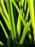 linje växt Arkivbilder