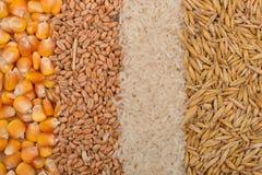 Linjer av bönor av torkade havre, havre, ris och vete som ligger på jute royaltyfria foton