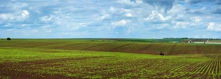 Linjer för sockerbetafältskördar, panorama Arkivbilder