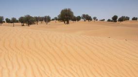 Linjer i sand Royaltyfria Foton