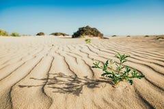 Linjer i sanden av en strand, Fuerteventura Fotografering för Bildbyråer