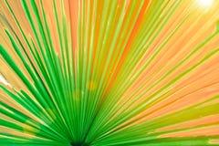 Linjer och texturer av gamla red ut palmblad, abstrakt backgr Arkivbild