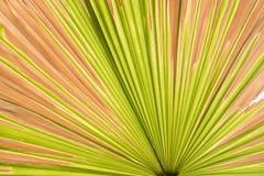 Linjer och texturer av gröna palmblad, abstrakt bakgrund Royaltyfri Foto