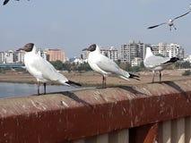 Linjerna av tre fåglar arkivbild