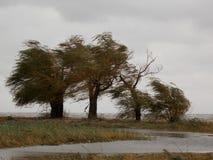 Linjerna av vinden Arkivfoto