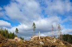 Linker bevindende bomen op een duidelijk gebied Royalty-vrije Stock Afbeeldingen