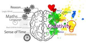 Linker en juiste hersenen